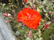 Flores felizes Fotografia de Stock