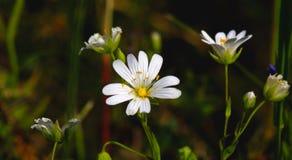 Flores filigranas pequenas imagens de stock