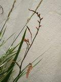 Flores fixadas na parede imagem de stock royalty free