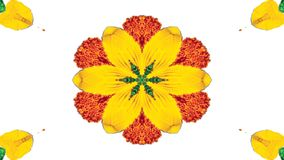 Flores Flora Kaleidoscope imagem de stock