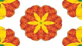 Flores Flora Kaleidoscope imagens de stock royalty free
