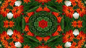 Flores Flora Kaleidoscope fotos de stock royalty free