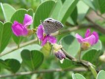 Flores, floración, naturaleza Fotos de archivo libres de regalías