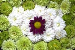Flores florais bonitas do fundo Imagens de Stock