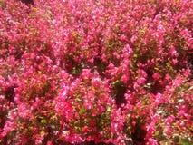 Flores florece el jardin de Flores imagen de archivo