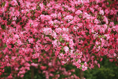 Flores florecidas Foto de archivo