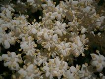 Flores florecientes Imagen de archivo