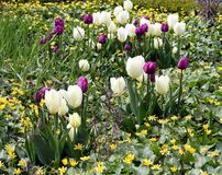 Flores florecientes Foto de archivo