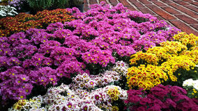 Flores florecientes Fotos de archivo