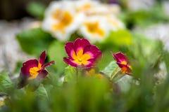 Flores florecientes fotos de archivo libres de regalías