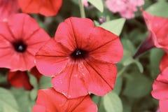 Flores florecientes crecientes del flowerswild rojo bonito fotografía de archivo