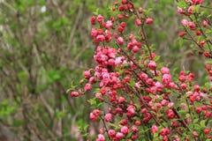 Flores florecientes de la primavera imagen de archivo libre de regalías