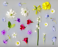 Flores florecientes del resorte Imagen de archivo libre de regalías