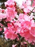 Flores florecientes del resorte Foto de archivo libre de regalías