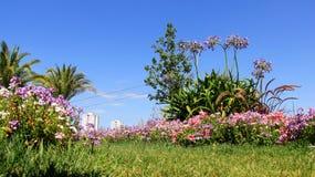 Flores florecientes en jardín del verano con el cielo azul Fotografía de archivo libre de regalías