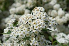 Flores florecientes en parque imagen de archivo libre de regalías