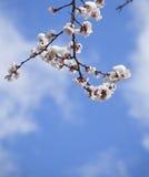 Flores en la nieve Foto de archivo libre de regalías