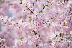 Flores florecientes rosadas Imagen de archivo libre de regalías