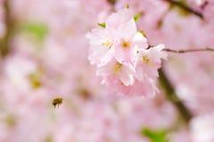 Flores florecientes rosadas Fotos de archivo