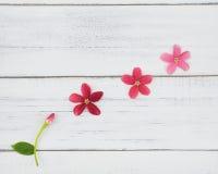 Flores florecientes y de florecimientos Fotografía de archivo libre de regalías