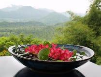 Flores flotantes Foto de archivo libre de regalías