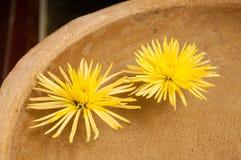Flores flotantes Fotos de archivo libres de regalías