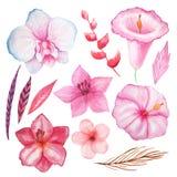 Flores, folhas e plantas tropicais da aquarela ilustração stock