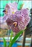 Flores fondo y papeles pintados de las orquídeas en impresiones de alta calidad superiores fotografía de archivo