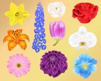 Flores fotorrealistas - diez Vector los ejemplos - para la impresión, web, apps, medios libre illustration