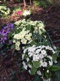 Flores francesas del invierno Imágenes de archivo libres de regalías