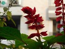 Flores frescas fotos de stock