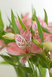 Flores frescas Imagem de Stock Royalty Free