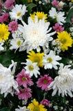 Flores frescas Foto de archivo libre de regalías