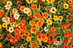 Flores frescas Imagen de archivo