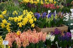 Flores frescas Imagens de Stock Royalty Free