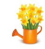 Flores frescas amarillas de la primavera en regadera verde. stock de ilustración