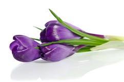 Flores frescas bonitas da mola Imagem de Stock
