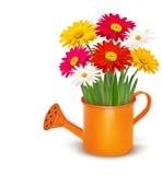 La primavera fresca colorida florece en c de riego anaranjada ilustración del vector