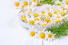 Flores frescas da camomila Foto de Stock