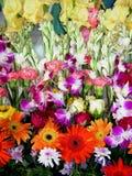 Flores frescas da exposição Fotografia de Stock