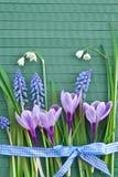 Flores frescas da mola Imagens de Stock