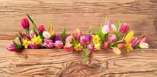 Flores frescas da mola em uma bandeira da Páscoa imagem de stock