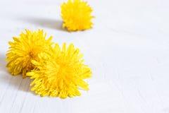 Flores frescas de dientes de le?n amarillos en un fondo blanco Dientes de le?n en la tabla de madera, foco en las flores en frent fotos de archivo