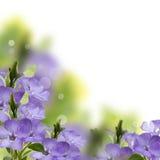 Flores frescas de la primavera en fondo del jardín Fotos de archivo