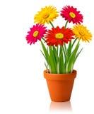Flores frescas del color del resorte stock de ilustración