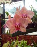 Flores frescas del jardín del jardín fotografía de archivo libre de regalías