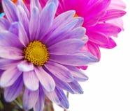 Flores frescas del resorte Foto de archivo libre de regalías