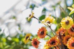 Flores frescas en fondo borroso extracto fotografía de archivo