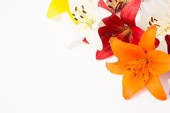 Flores frescas hermosas Dulzura y olor agradable Lirios del jardín foto de archivo