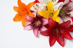 Flores frescas hermosas Dulzura y olor agradable Lirios del jardín fotografía de archivo libre de regalías
